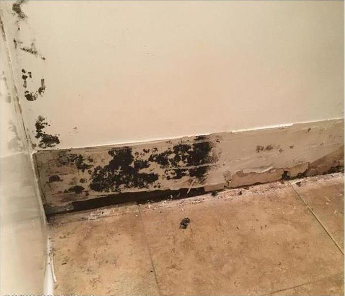 Mold Remediation Can we mitigate that mold? Yes we can!