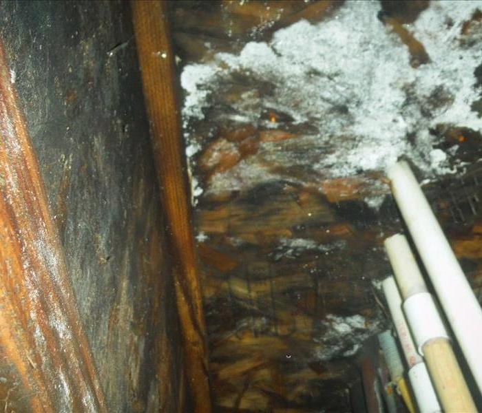 Mold Remediation Concerns with Mold in your Four Corners Area home?