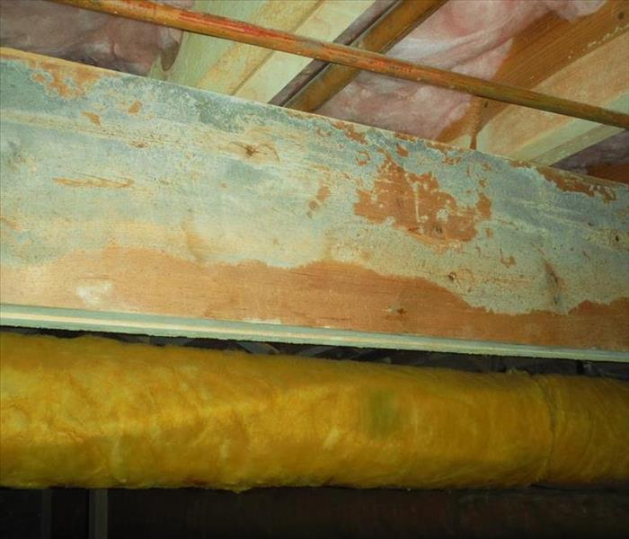 Mold Remediation Does Your Durango Area Home Have A Mold Problem?